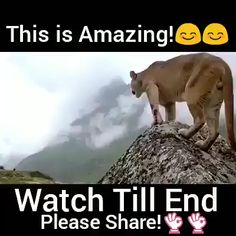 This Is Amazing…. – Petra Leona Martínez Burgos This Is Amazing…. You will want to quit watching because of what's happening, but don't. Funny Animal Videos, Funny Animal Pictures, Cute Funny Animals, Cute Baby Animals, Funny Cute, Funny Dogs, Animals And Pets, Cute Cats, Baby Animal Videos