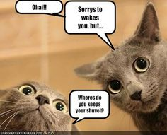 funny thursday pictures | Alexia's Books and Such...: Cat Thursday (40)