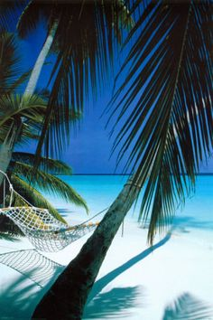 Palm View Hammock #paradise