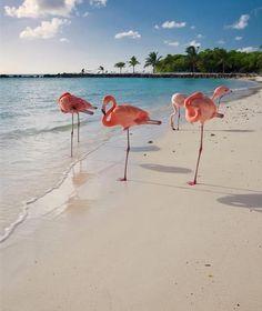 Beautiful Flamingos at Very Beautiful Beach