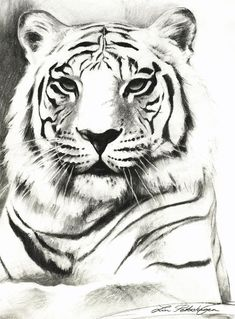 http://images.fineartamerica.com/images-medium-large/white-tiger-portrait-lin-petershagen.jpg