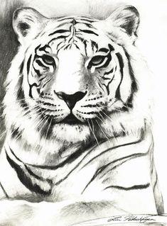 http://images.fineartamerica.com/images-medium-large/white-tiger-portrait-lin-petershagen.jpg