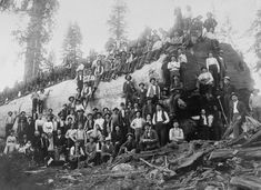 The old-school lumberjacks who felled giant trees with axes 1917 Over 100 people stand with a logged giant sequoia tree in California.