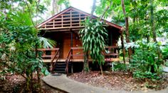 Choose the overnight rainforest option - sleep in a rainforest cabin for the night! Travel Around The World, Around The Worlds, Safari, Cairns Queensland, Daintree Rainforest, Explorer, Tour Operator, Travel Tours, Bird Species
