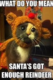 Image result for swiped santas butt cat card