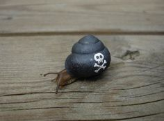 Pirate snail painted to protect him from getting stepped on — by Stefan Siverud @ http://www.legalassassin.com/?p=333