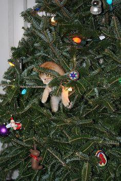 my favorite ornament