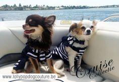 Chihuahua Rocky & Angel showen de cruise line in stijl
