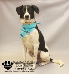 HELLO  I WAS LOST AND THEY FOUND ME  I WAS IN THE LANCASTER AREA  THEY ARE CALLING ME RUSTY  I AM  A SPANIEL AND POINTER MIX  DO YOU KNOW ME  ORMY FAMILY  IF NO ONE CIOMES FOR ME  I WILL BE UP FOR ADOPTION ON  AUGUST 5, 2013 AT 12:00 PM