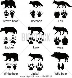 """Find """"wolf silhouette"""" stock images in HD and millions of other royalty-free stock photos, illustrations and vectors in the Shutterstock collection. Wolf Silhouette, Animal Footprints, Animal Tracks, Badger, Illustrations Posters, Bushcraft Equipment, Bushcraft Skills, Camping, Wild Animals"""