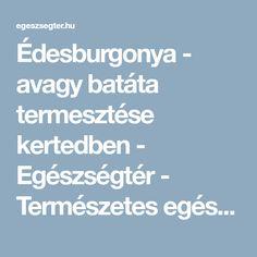 Édesburgonya - avagy batáta termesztése kertedben - Egészségtér - Természetes egészség Gardening, Lawn And Garden, Horticulture
