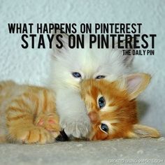 SHH! What happens on Pinterest stays on Pinterest! ~ cute kitties!