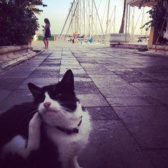 #cat #mogan #lomography #photooftheday #igramers #instagram #instagramers - @zuzanna_p- #webstagram