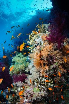 Fifty-Two Beautiful Ocean Animals That You Can See when You Scuba Dive Life Under The Sea, Under The Ocean, Under The Water, Underwater Life, Beautiful Ocean, Amazing Nature, Ocean Creatures, Sea World, Underwater Photography