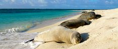 Two young seals and a turtle sleeping on a beach.
