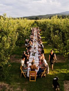 dinner with apple trees.