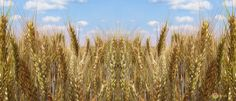 SCimPULSE foundation: Resuscitation: giving the farmer's land a second c...