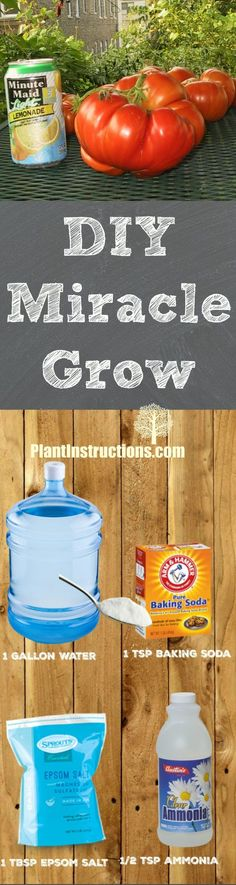 This homemade miracle grow recipe contains all natural ingredients so you know your plant is getting the best every time you feed it! Organic Gardening, Gardening Tips, Vegetable Gardening, Homemade Plant Food, Fertilizer For Plants, Edible Plants, Cool Plants, Growing Plants, Growing Vegetables