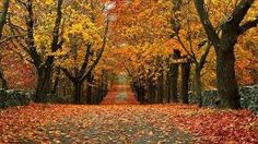 Image result for beautiful fall photos