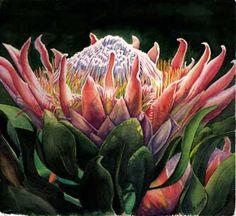 Artwork ID - Bridgette Adams - Passion For Protea Protea Art, Protea Flower, Flower Painting Canvas, Floral Paintings, Mini Paintings, Watercolor Flowers, Watercolor Art, Soul Art, Rare Flowers