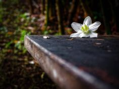 #Madinina vue par @crinos_pix: Abandoned   #flowers #nature #martinique #caribbean #westindies #madinina #ig_martinique #ig_caribbean #matinik_pictures #westindies_pictures #martiniquefwi #WeLike ! A voir sur Instagram : http://ift.tt/1Tbc4uH