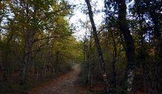 Siguiendo el camino se llega al nacedero del río Zadorra