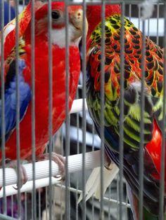 Paris Markets, Parrot, Bird, Parrot Bird, Parrots, Birds