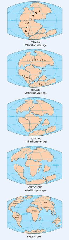 Pangea Continent Map – Continental Drift – Supercontinent Source by magslave Earth Science, Science And Nature, Structure Of The Earth, Pseudo Science, Plate Tectonics, Earth From Space, Historical Maps, Constellations, Archaeology