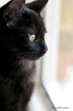My Black Cat  On The Window