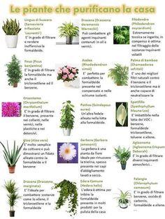 piante che purificano l'aria