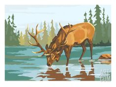 Stag Drinking Water Art Print by Pop Ink - CSA Images at Art.com