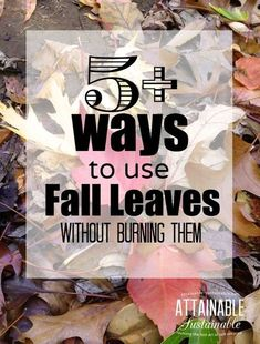 Stop the leaf burning madness!