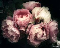 Fotobehang Beautiful bouquet of pink roses, flowers on a dark background, soft and romantic vintage filter, looking like an old painting - Nikkel Art