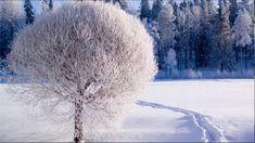 The Nearness Of You & Winter & Roman SzczepaniakTenor Sax