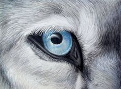 'Icy Glance - Silver Gray Wolf Blue Eye Colored Pencil Drawing Painting' by AmandaUlfrica Colored Pencil Artwork, Color Pencil Art, Colored Pencils, Wolf Eye Drawing, Nature Drawing, Animal Drawings, Pencil Drawings, Wolf Drawings, Eye Drawings