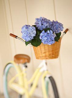 hydrangeas, basket, vintage bike... <3