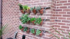 Stick and chicken wire, wall mounted herb garden.