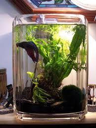 Aquatic nano garden tank made from a 2 gallon acrylic wastepaper bin. Betta Aquarium, Nano Aquarium, Cherry Shrimp, Fish Tank Design, Indoor Water Garden, Betta Fish Care, Shrimp Tank, Betta Tank, Nano Tank