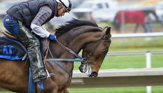 Lesiones del caballo más frecuentes: tendinitis equina.