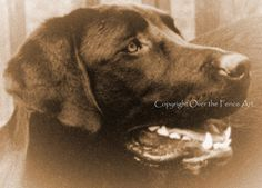 Black Labrador Art Photo Greeting Card Pet by overthefenceart