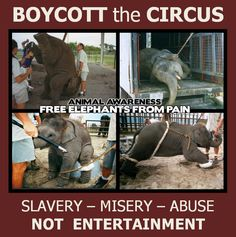 Boycott the Circus Here here! I totally abhor the circus. Animals in cages or doing tricks are NOT for our enjoyment. Orcas, Stop Animal Cruelty, Save Animals, Animal Welfare, Animal Quotes, Animal Rights, Animal Rescue, Animal Testing, Beautiful Creatures