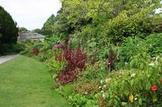 Lush exotic border at Trelissick, Cornwall. The two secrets to this are 1) scale (big plants, big clumps, big border), and 2) allowing enough space in front to stand back and take it in! Without a good sized open space in front this border would be overwhelming. Scale is crucial here!