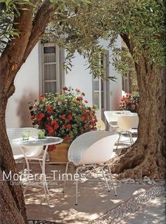 "Relaxing under the olive trees at ""Orloff Resort"" in Spetses"