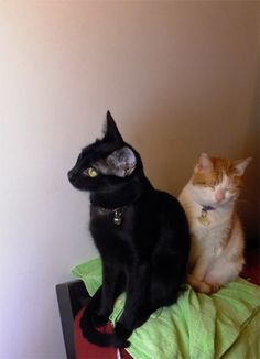 Black cat and a tabby...looks like Poppa and Coco