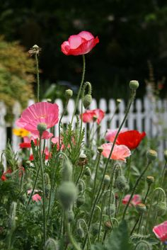 oooh, I love poppies... I don't know if they are doable at this stage, or maybe save them for later... j