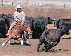 The horse looks like he is fixin to tear into that cow! Just GORGEOUS