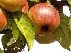 'Art Spalierapfel' von Dirk h. Wendt bei artflakes.com als Poster oder Kunstdruck $18.03