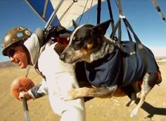 Dan McManus suffers from anxiety, and his therapy dog, an Australian Cattle Dog named Shadow, helps him cope. Further, this sweet duo even hang glides together!