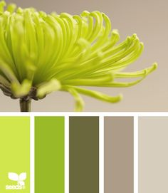 Green to light grey