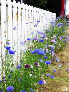 15 Lovely Little Cottage Garden Design Ideas For Backyard Inspiration Lovely .-- 15 Lovely Little Cottage Garden Design Ideas For Backyard Inspiration Lovely Little Cottage Garden Design Ideas 210 – # Amazing Gardens, Beautiful Gardens, Beautiful Flowers, Beautiful Pictures, Beautiful Beautiful, Garden Cottage, Backyard Cottage, Small Cottage Garden Ideas, Very Small Garden Ideas